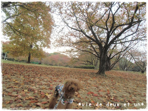20151107blog2.jpg