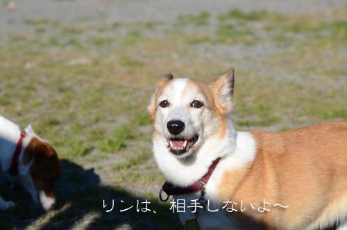 2015-12-31-年越し-022