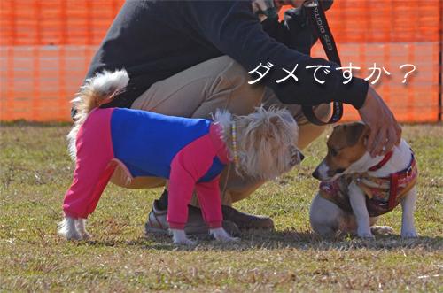 2016-01-31-東海広場-023