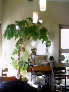 CAFE FLAT 151229_1417~001