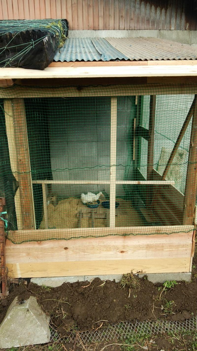 鶏舎151213-3
