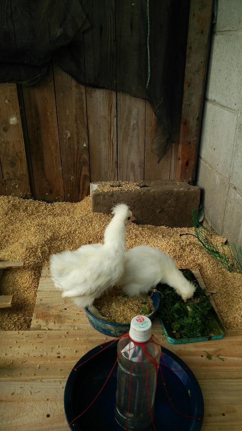 鶏舎151213-5