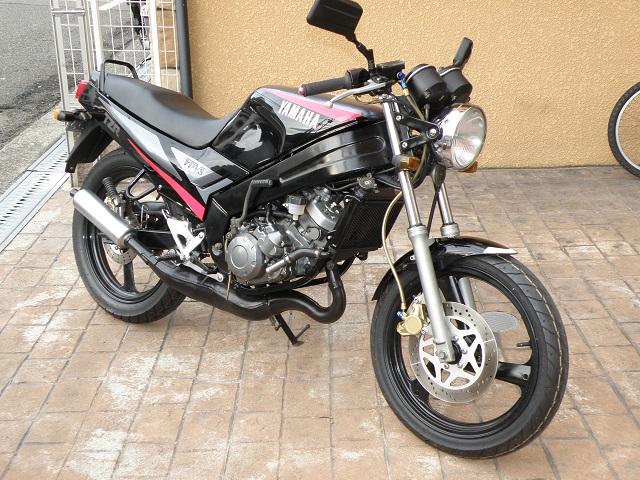 TZR12503052.jpg
