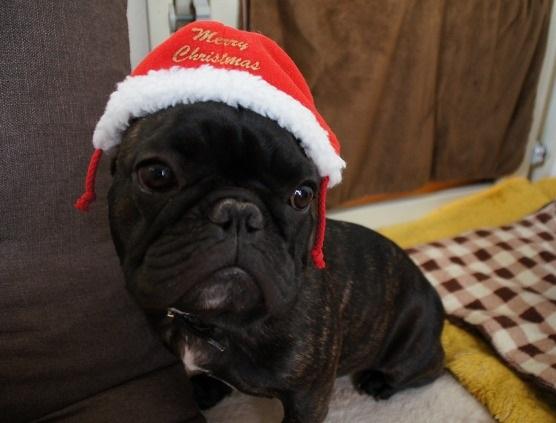 クリスマスサンタゆず