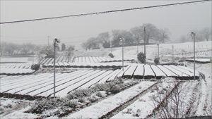 20160217雪景色_R