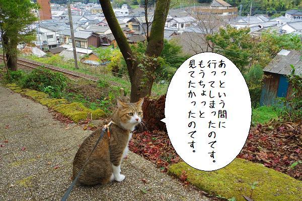 陶山神社11