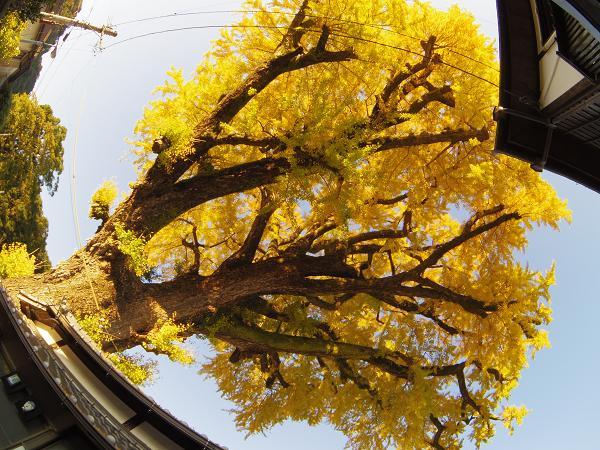 陶山神社14