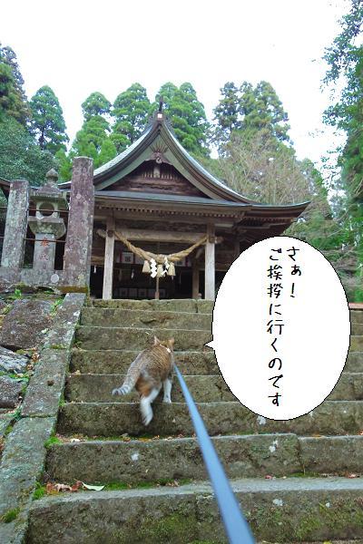 国造神社7