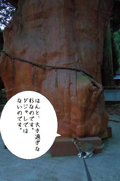 国造神社14