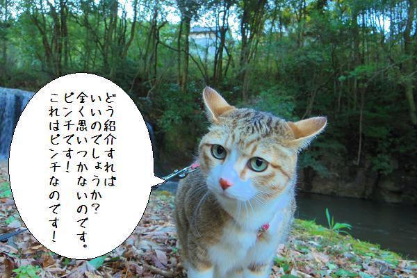 狸穴の滝4