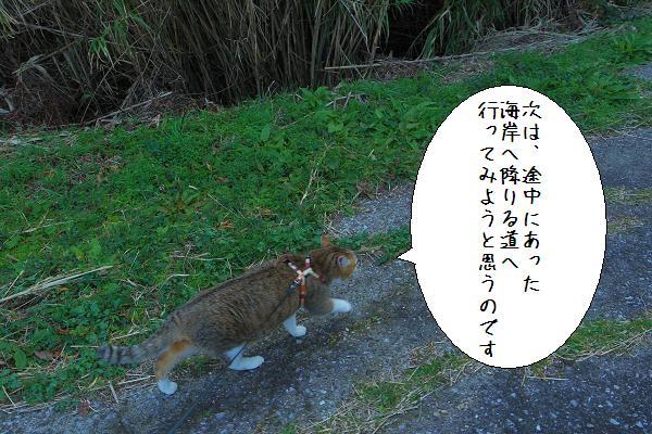 関埼灯台10