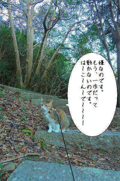 関埼灯台13