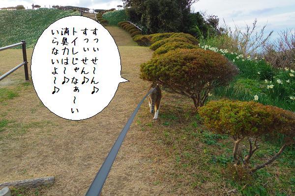 水仙の里公園1