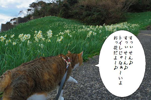 水仙の里公園4