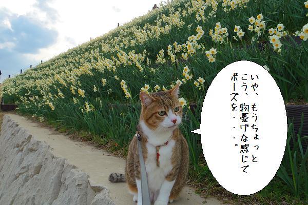 水仙の里公園10