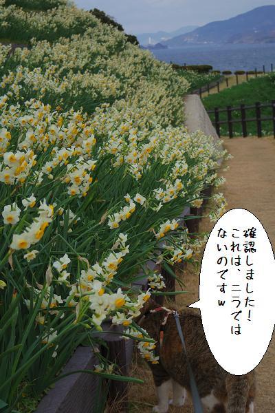 水仙の里公園6