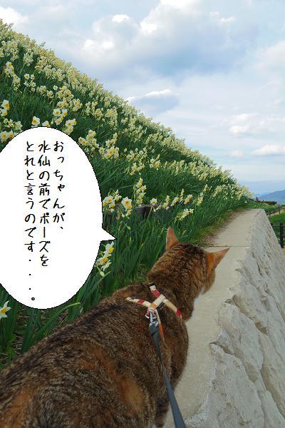 水仙の里公園8