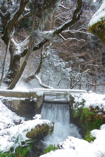 冬の山吹水源5