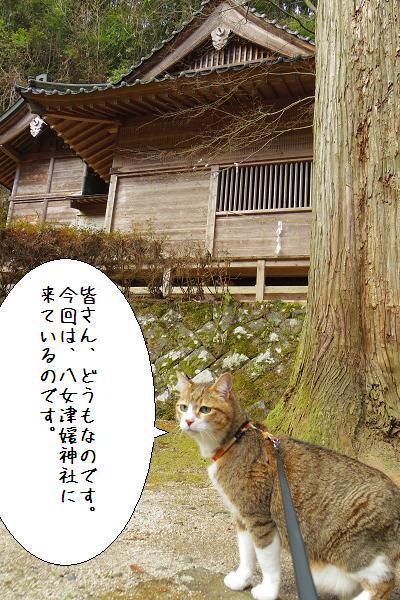 八女津媛神社6