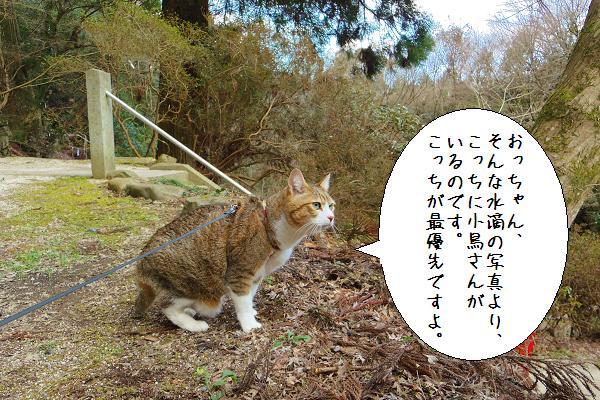 八女津媛神社11