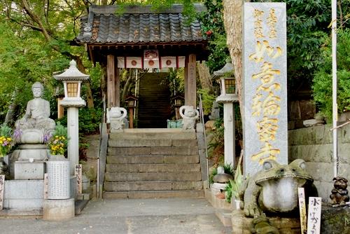 271105 かえる寺9