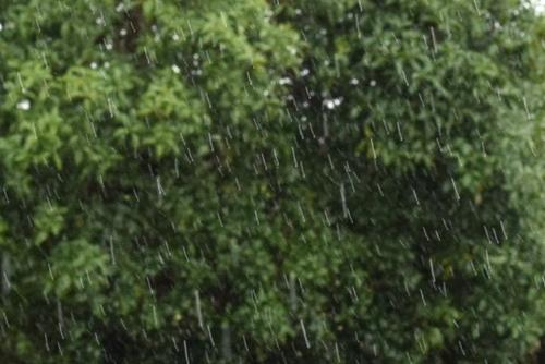 271118 雨1