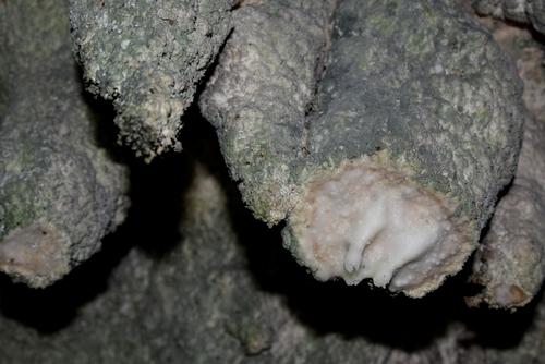 271206 中甫洞穴13