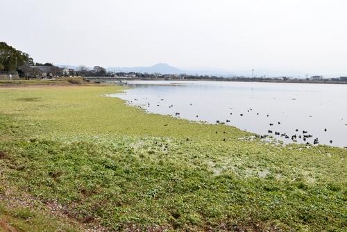 280122 江津湖14
