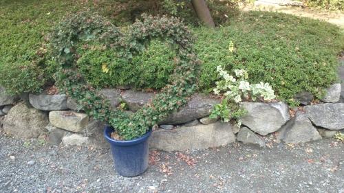 参禪先の庭02
