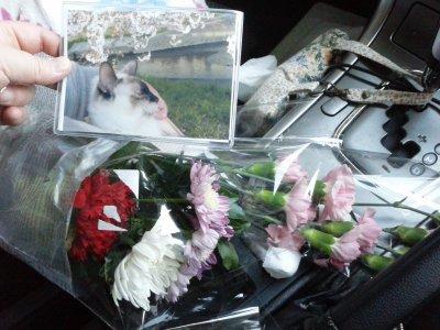 タヌさんへのお花