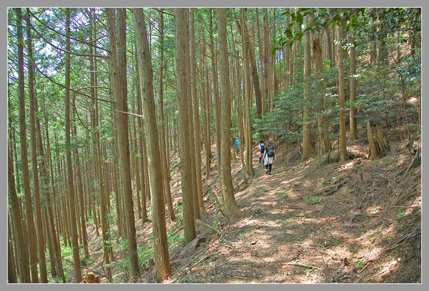 15吉野山