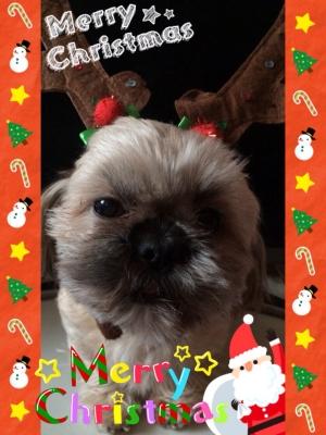 ちっくんのクリスマス1