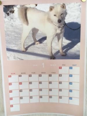1月カレンダーチロちゃん