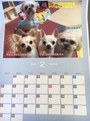 2月カレンダー4匹