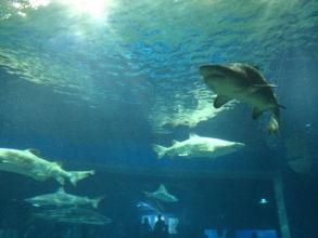 茨城県おすすめスポット「アクアワールド茨城県大洗水族館」に家族と行く♪