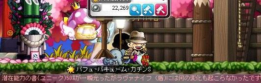 Maple13988a.jpg