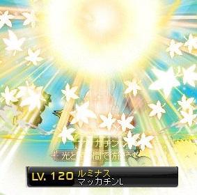 Maple14175a.jpg