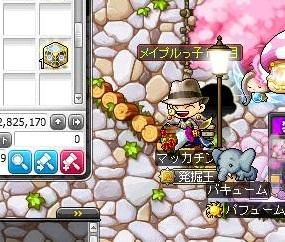 Maple14235a.jpg