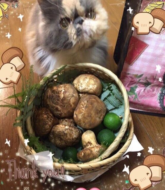 キティと松茸 (555x640)
