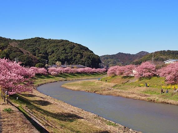 kawazu-20160221-17s.jpg