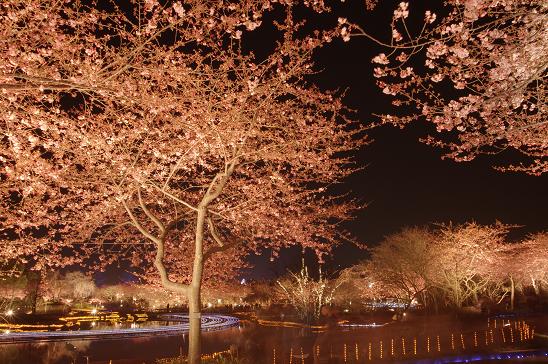 桜2016・2・2349