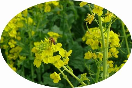 定番のミツバチ
