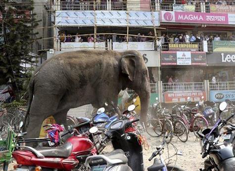 あばれる象