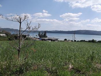 amamiooshima325.jpg