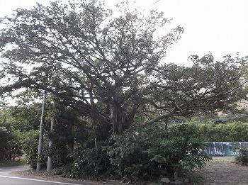amamiooshima326.jpg