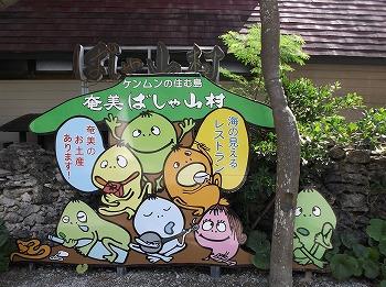 amamiooshima335.jpg