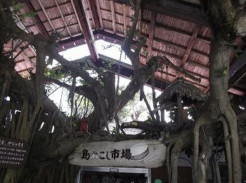 amamiooshima339.jpg