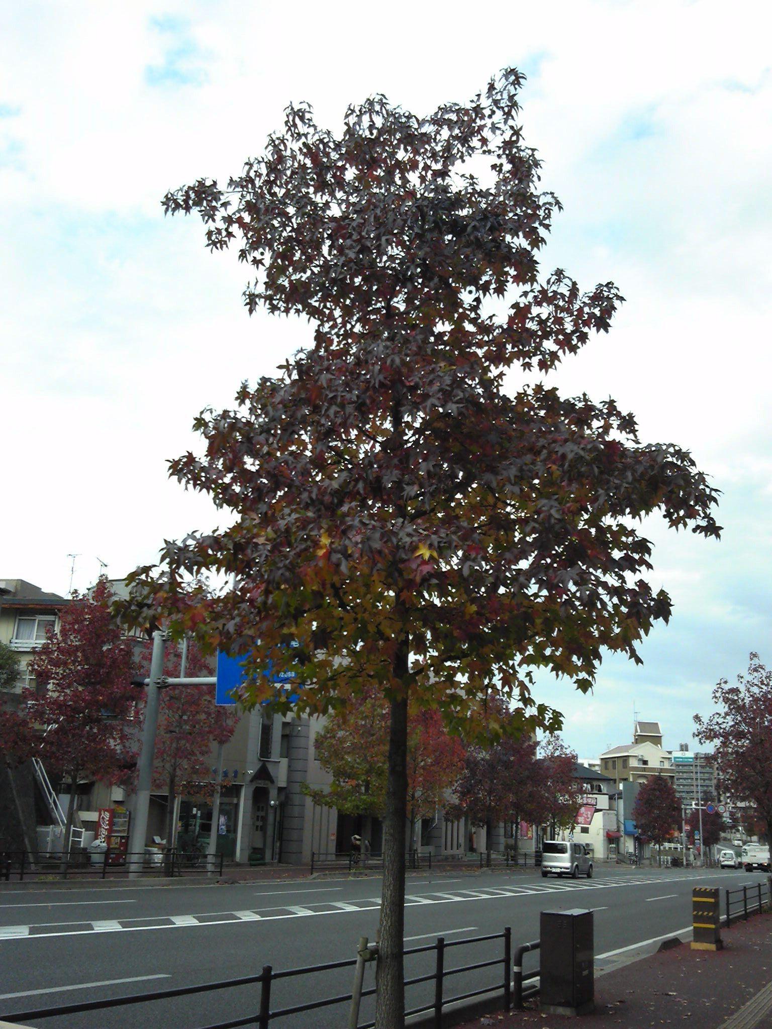 1121街路樹
