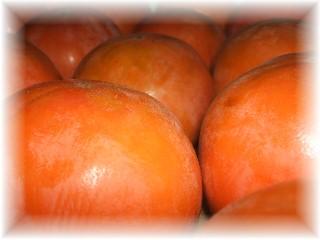 富有柿-3