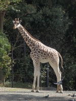 BL151028天王寺動物園2PA280044